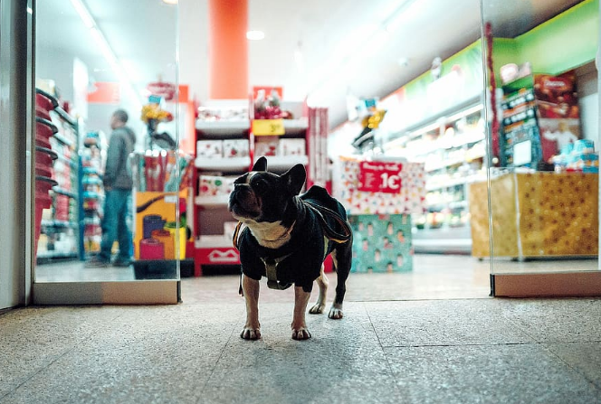 Buying Pet Supplies to Make Your Pet Feel Comfortable