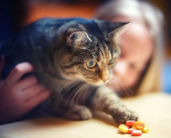 Understanding Pet Prescription Drug Cards