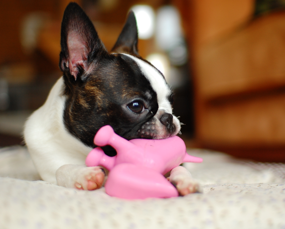 Making your Dog Healthy and Happy with Dog Toys